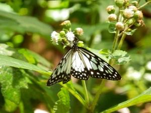 Ubud_Butterfly_Park