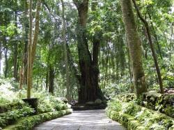 Ubud_Monkey_forest