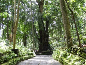 Ubud_Monkey_forest