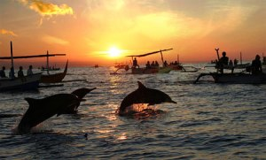 Swim_with_dolphin_in_Bali