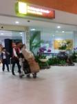 Airport to canggu