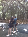 Bali Bamboe Forest