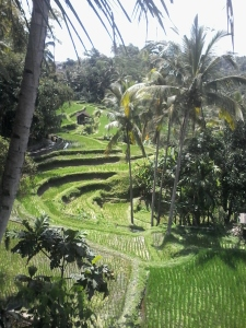 Rice Terrace Gunung Kawi