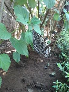 Butterfly park ubud