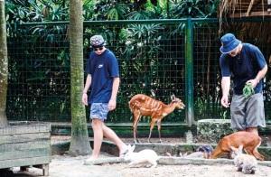 petting_bali_Zoo