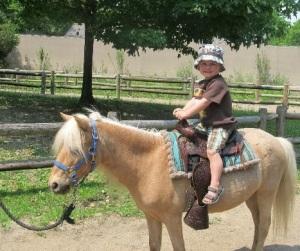 Pony_ride_bali_zoo
