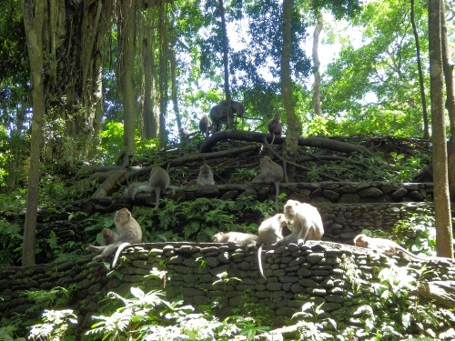 https://seminyakbalidriver.files.wordpress.com/2016/02/ubud-monkey-forest.jpg