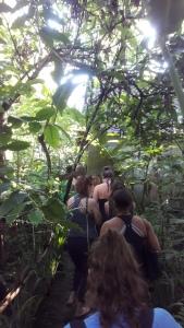 Bali_luwak_coffee_farm