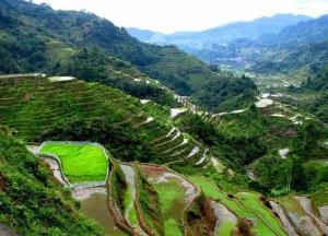 Bukit_jambul_Bali