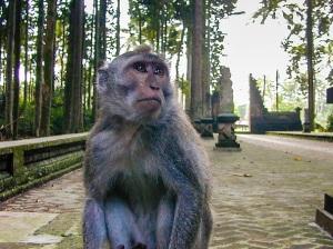 sangeh_monkey_forest