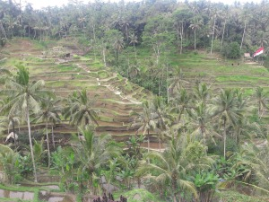 Ubud_rice_terrace