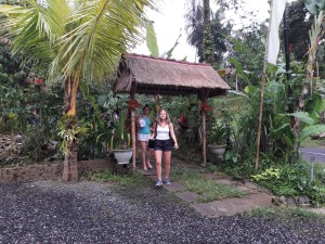 Bali_Geo_coffee_Plantation