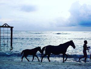 horse_gili_trawangan
