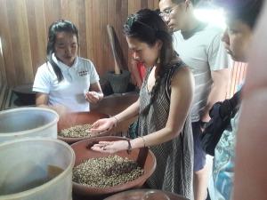 Tegal_sari_coffee_plantation