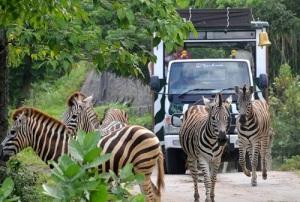 Jungle_Hopper_Bali_safari