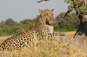 leopard_package_bali_safari