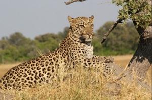 leopard_package_bali_safari