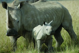 Rhino_package_bali_safari