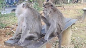 monkey_forest_ubud