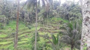 Tegalalang_rice_terrace_2017