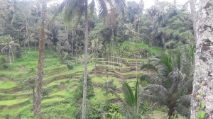 Tegalalang_rice_terrace_2017