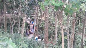 Monkey_forest_ubud_2017