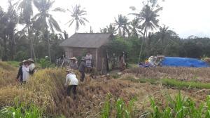 Bali_rice_field_tour