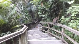 bridge_at_monkey_forest_ubud