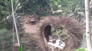 bali_bird_nest