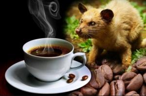 coffee_ Luwak_bali