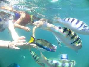 Lovina Snorkeling