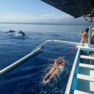 Swim_with_dolphin