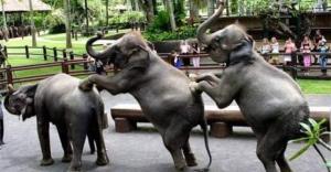 mason_elephant_safari