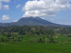 West_Bali_Rice_Terrace